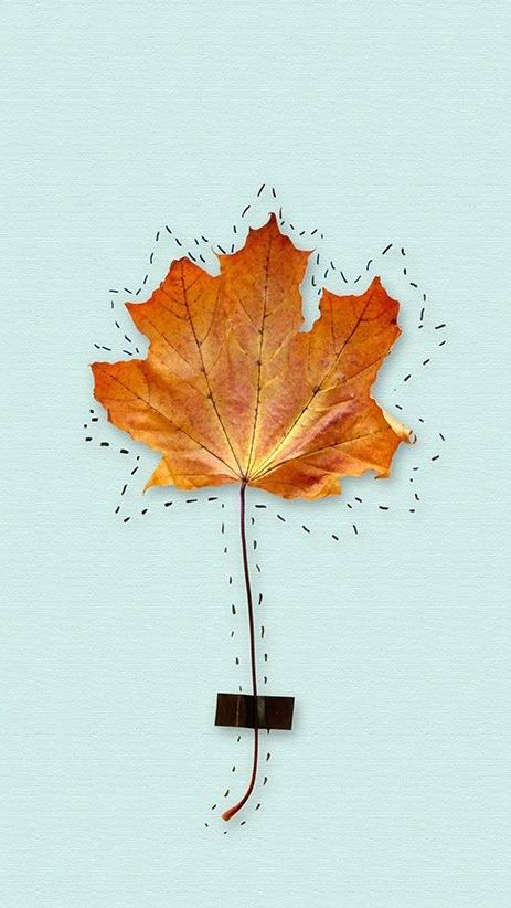 Leaf ★ Find more autumn & other seasonal wallpapers for your #iPhone + #Android iPhone Wallpapers