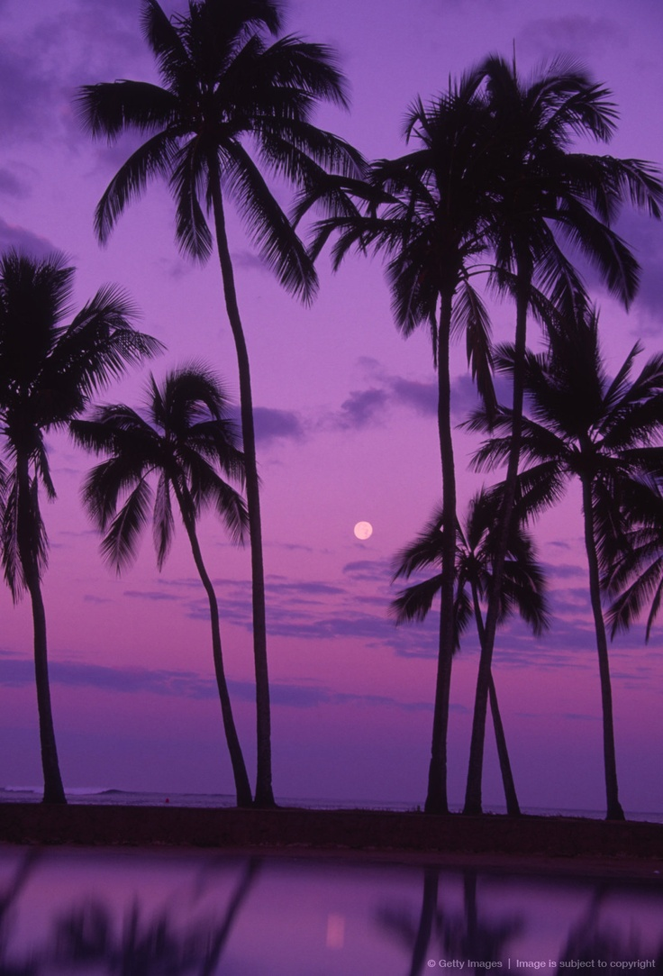 Image detail for -Palm trees with moon in a bright pink and purple sky, reflecting on still water.