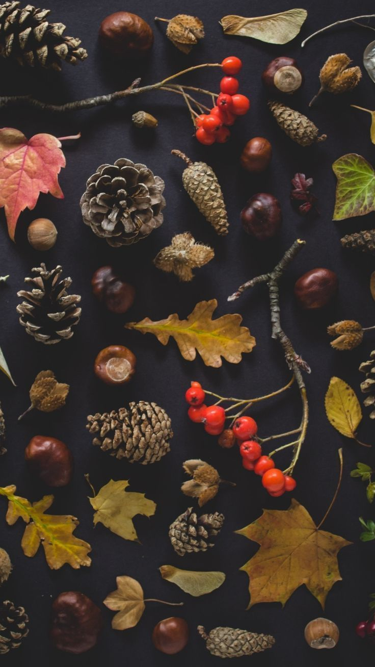 14 iPhone Wallpapers That Will Make You Fall In Love With Autumn | Preppy Wallpapers