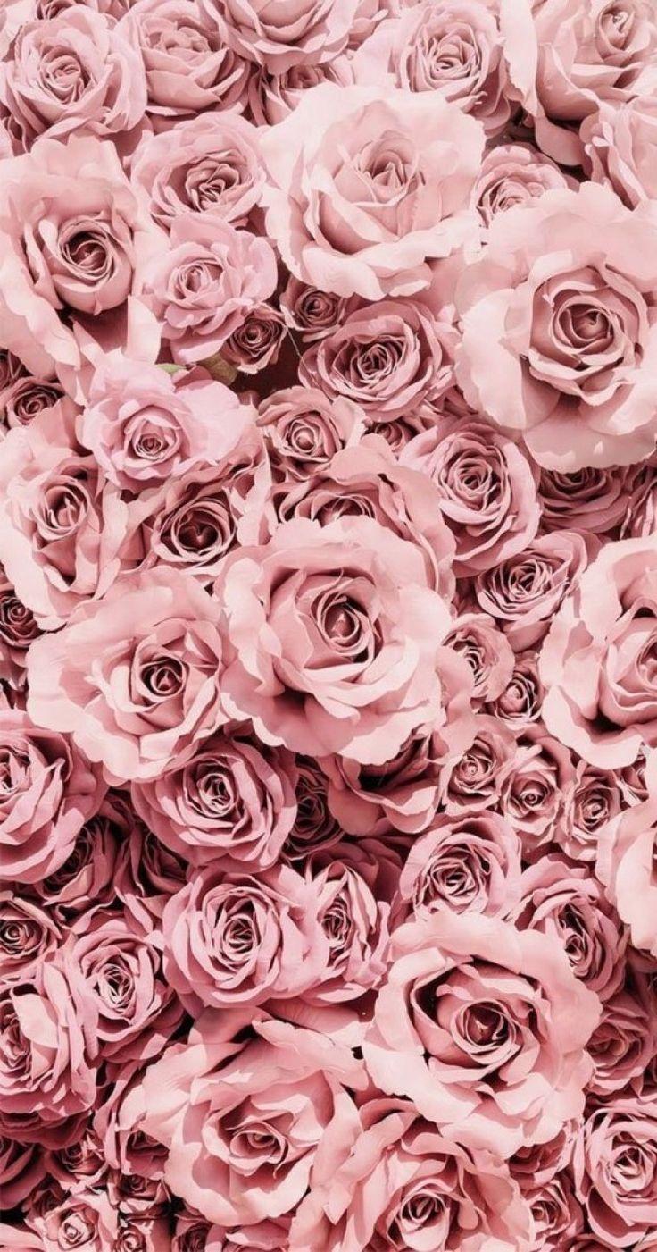 Pretty pink mauve roses #roses