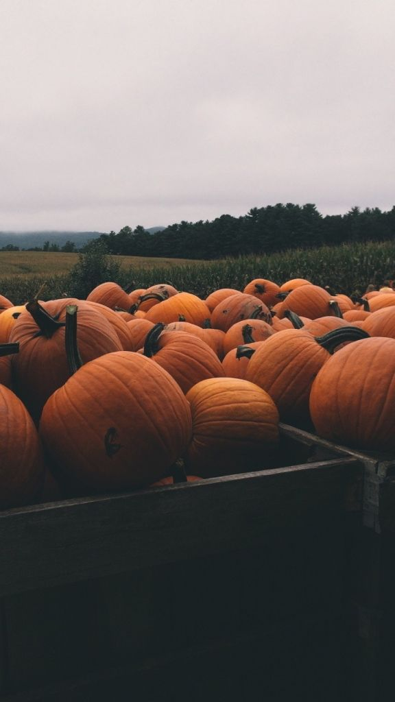 Halloween Pumpkins ★ Find more autumn & other seasonal wallpapers for your #iPhone + #Android iPhone Wallpapers