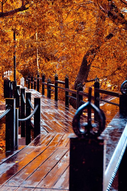 atraversso: Bridge - Canada by Vlad Tartuzhev