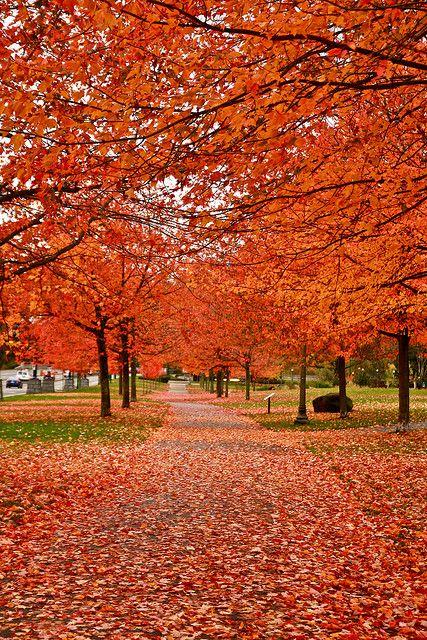 Vancouver , BC Canada Esta estacion es preciosa, el cambio de colores en las hojas es algo maravilloso verlo. Otoño ,el cielo se pone tierno,sientes el sol fresco en tu piel .