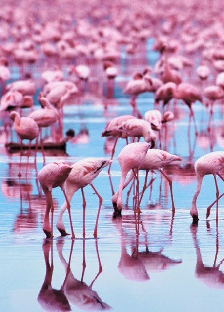 The Painted Bench - Pink Flamingos