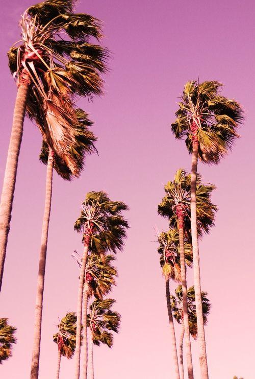 :: pink skies ::
