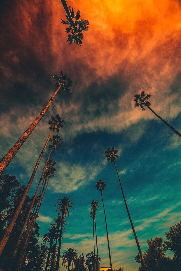 "souhailbog: "" Gotta love Palm Trees 🌴 By Innovationartz """