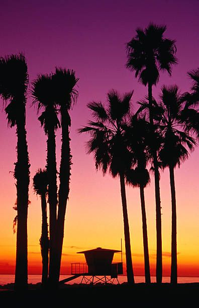 Palm Trees at Sunset, Venice Beach, California