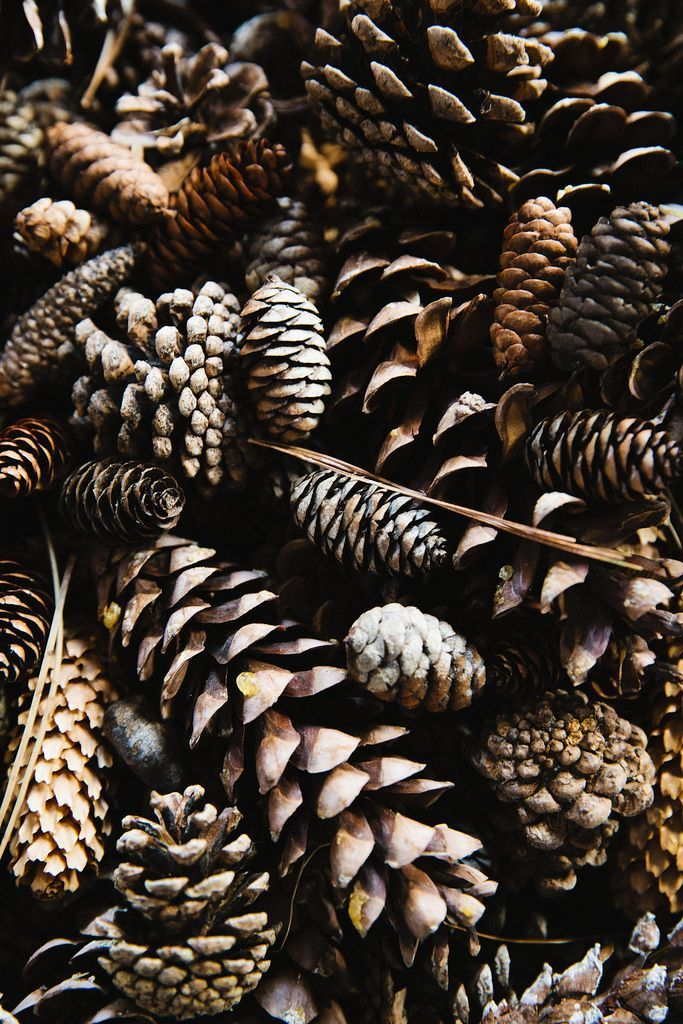 Pine Cones ★ Find more autumn & other seasonal wallpapers for your #iPhone + #Android iPhone Wallpapers