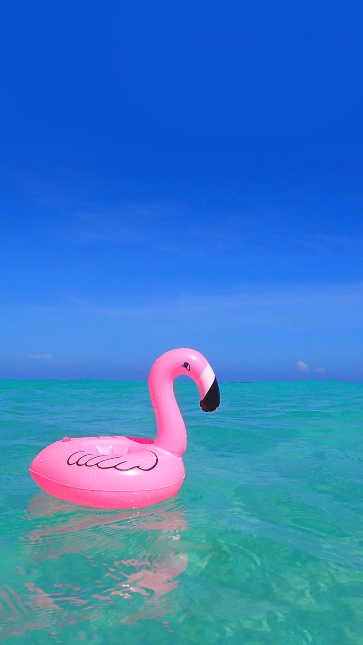 Flamingos in the sea | Stylish iPhone wallpapers