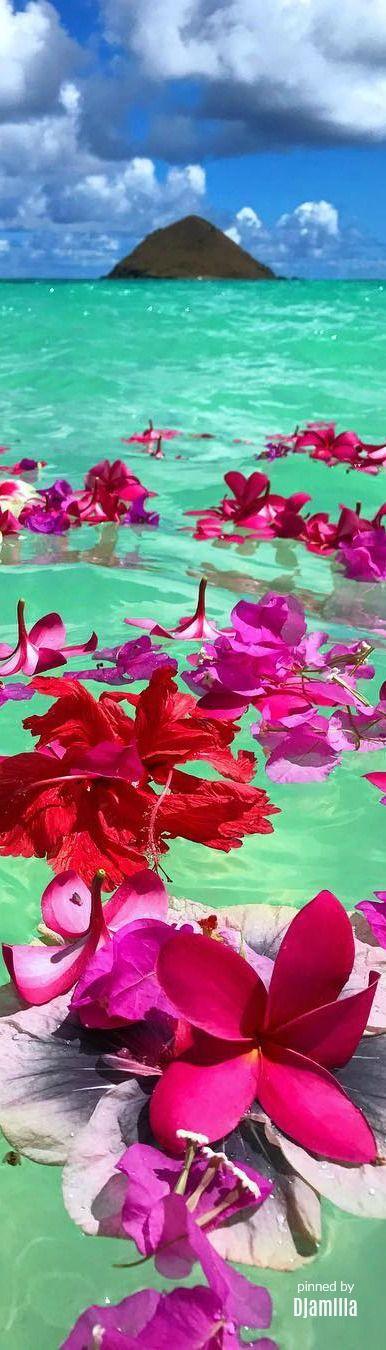 Hawaii #summerfeeling by Aimee Imai