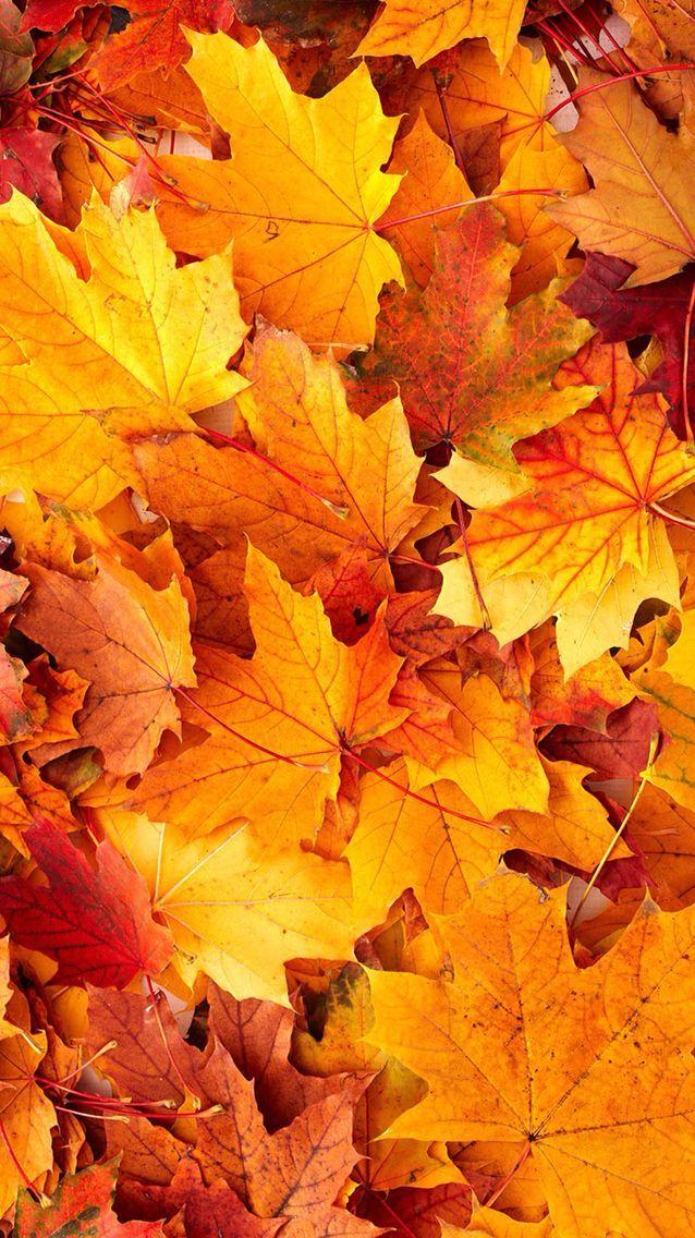 Latest Fall #Fall #Latest #orangewallpaperiphonex