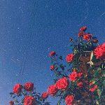 ☆彡 pinterest