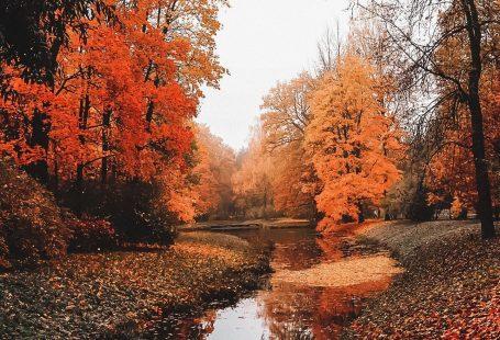 ☁︎·̩͙✧  ☁︎·̩͙✧ #autumncolors ☁︎·̩͙✧  ☁︎·̩͙✧