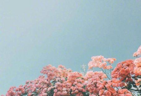 100 Schöne iPhone Wallpaper, iPhone Hintergrund ... - #background #Beautiful # ... , #background #beautiful #hinterg