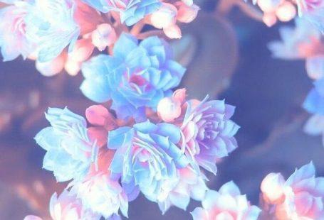 1001  Frühling Hintergrundbilder pro Ihr Handy und Ihren Desktop Computer #computer #desktop #fruhling #handy #hintergrundbi