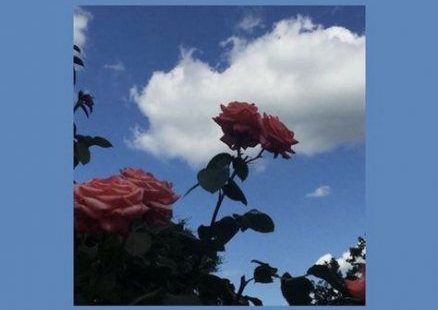54+ Ideas For Flowers Vintage Wallpeaper Backgrounds #flowers