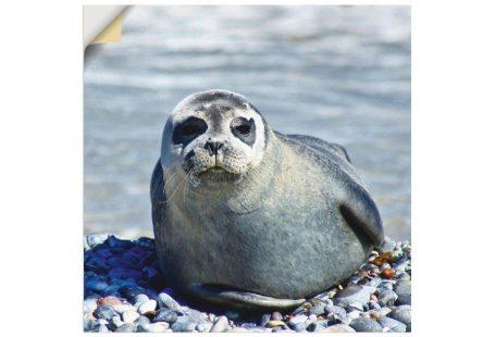 Wandfolie »Kattobello: Robbe am Strand von Helgoland«