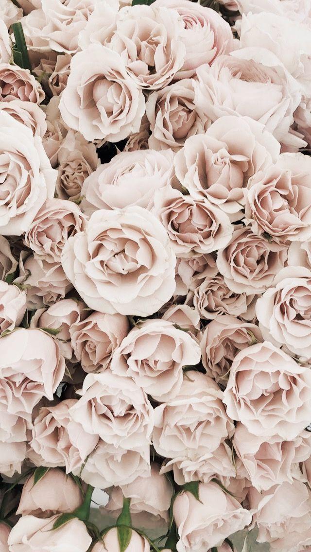 Blumen  floral  blüht  Stapel  Strauß  Schnittblumen  getrocknet #bluht #blumen #floral #getrocknet #haufen