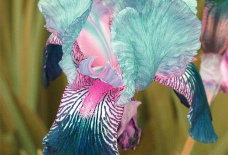 Carnival of color: 30 of the most incredible multi-colored flowers in the world
