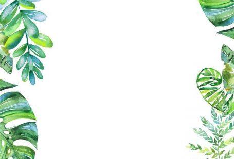 Frais de feuilles vertes de programme d