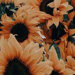 Gelbe Sonnenblume ästhetisch bearbeiten #asthetisch #bearbeiten #gelbe #sonnenblume