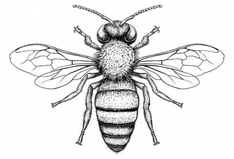 Honey bee engraving illustration on white background Premium Vector