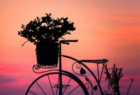 For Liz.....ie...bikes