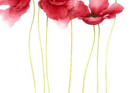 Poppies by Jan Harbon [so perfect]