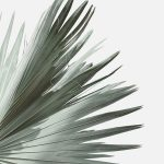 Palm Leaf Photography. #homeart #palm #artprint #affordableart #homedecor