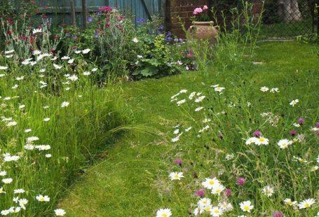 So erstellen Sie einen schönen Mini-Wiesengarten , #einen #erstellen #schonen #wiesengarten