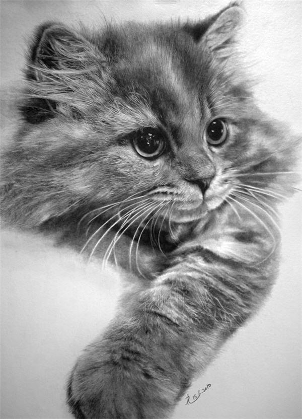 Pencil Sketched Cats
