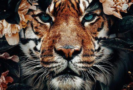 Tiger Jungle Poster bestellen - - #bestellen #jungle #poster #tiger - #new