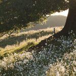 Tree & Daisies