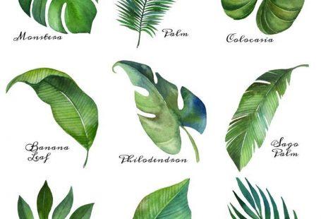 Tropical Leaf Free Printable Art -Series of 9