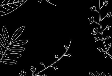 Wallpaper para celular download grátis