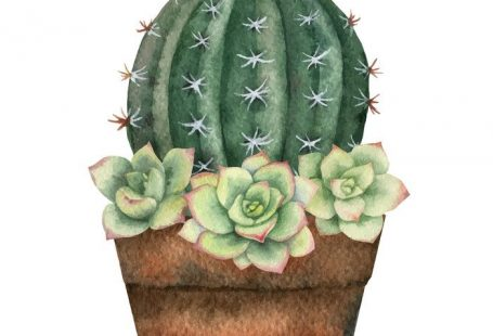 Watercolor vector composition of cacti and succulents in a pot isolated on white background. Flower illustration for your projects, greeting cards and invitations. Download a Free Preview or High Quality Adobe Illustrator Ai, EPS, PDF and High Resolution JPEG versions.