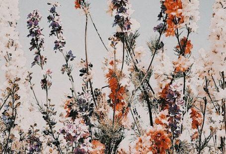 #flowers #summer #garden #summervibes #goodvibes,  #Fl