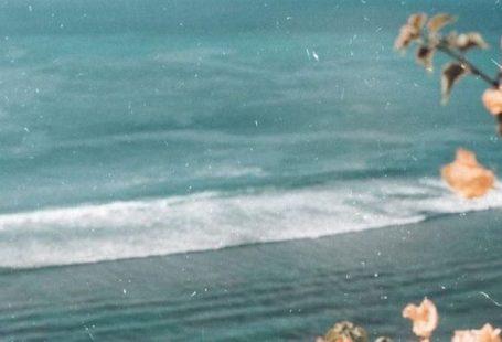 Bougainvillea at the ocean- flowers