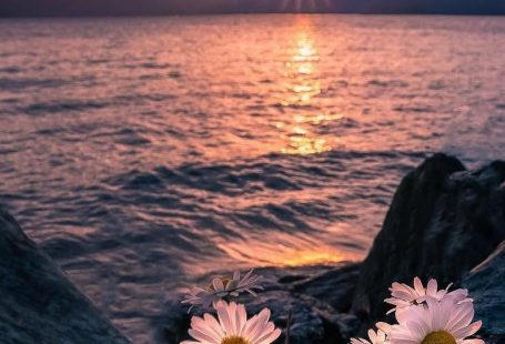 jura #beautifulflowerswallpapers jura #wallpaperbackgrounds jura #beautifulflowerswallpapers jura
