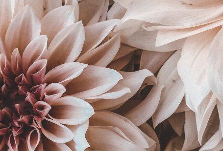 phonewallpaper flowers #phonewallpaper , - Blumen - #Blumen #hintergrundbildernatur
