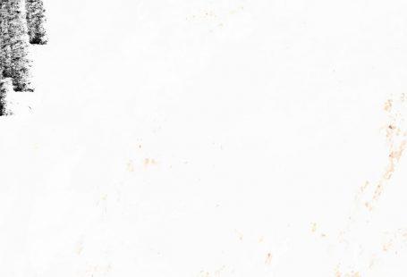 Eucalyptus leaf pattern on white background mobile phone wallpaper vector