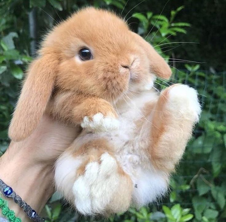 Fashionable Toys for Rabbits (2018) - #Popular #rabbits #toys