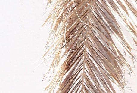 Merchant Marin Bleach Frond #beautifulflowerswallpapers Merchant Marin Bleach Frond