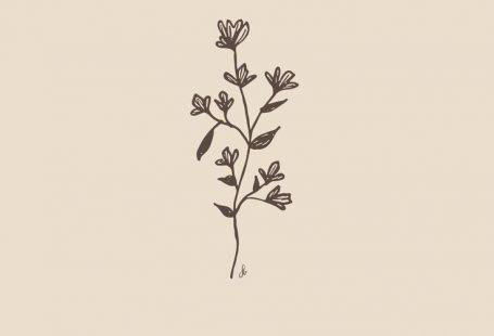 Mit Anmut blühen   #Blossom #grace