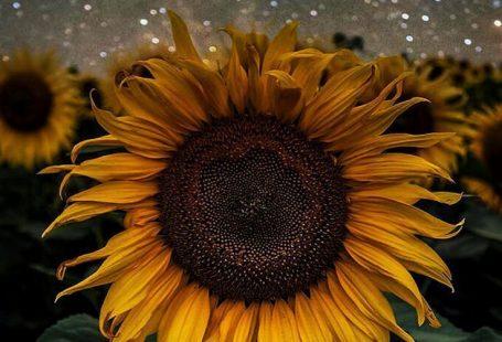 Sonnenblumen-Kulisse! welches Sie nötig haben // 1. gefälschte Sonnenblumen (k  Sonnenblumen-Kulisse! welches Sie nötig haben // 1. gefälschte Sonnenblumen (kaufen Sie Blumen in voller Größe aus dem Dollar-Store und schneiden Sie die Stiele) 2. Schnur 3. großes Stück Sperrholz 4. Anweisungen z. Hd. Heißkleber // 1. Messung Sie die obere Saite gen die Größe Ihres Sperrholzes 2. Schneiden Sie zwei unterschiedlich heftige Menstruationsblutung Saiten 3. Kleben Sie  The post Sonnenblumen-Kulisse! wel
