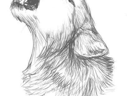 26 Atemberaubende Tierzeichnungen aus Bleistift und Papier,  #atemberaubende #bleistift #papier #tierzeichnungen Check more at