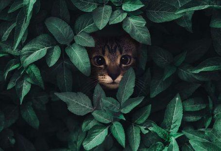 8 typische Dinge, die Katzenbesitzer tun können, um das Herz und den Geist einer Katze zu brechen…,  #brechen #das #den #die #Dinge