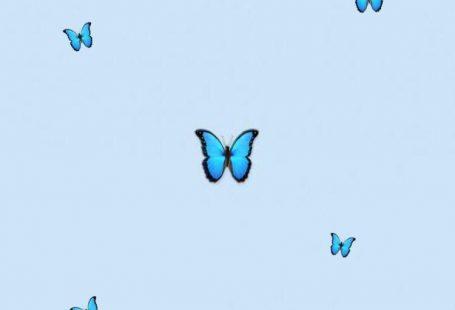 Aesthetic butterfly  #blueaesthetic #aesthetic #butterfly #wallpaper #tumblr