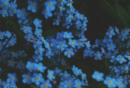 Bild über Fotografie in ورد 🌹 Blumen von YASMIN ❣️, #Bild #BLUMEN #Fotografie #über #von