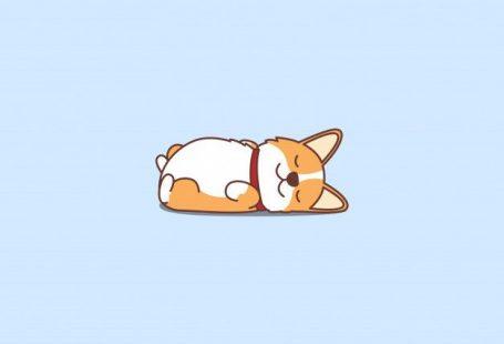 Cute welsh corgi puppy lying on back cartoon icon Premium Vector